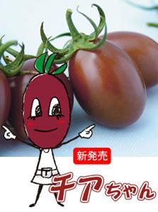 チアちゃん(ミニトマト)