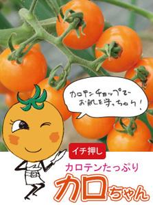 カロちゃん(ミニトマト)