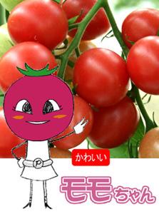 モモちゃん(ミニトマト)